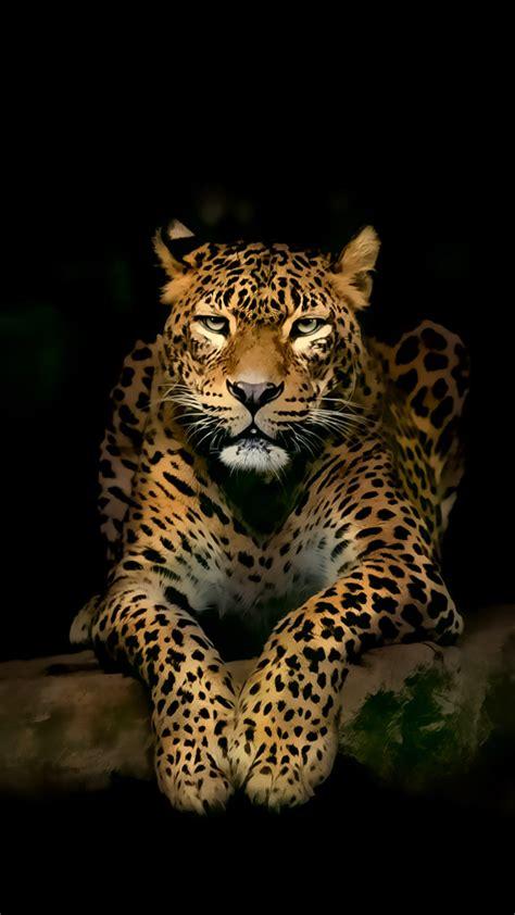 leopard iphone wallpapers leopard wallpaper