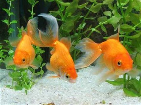 tree fish el agua de los peces mascotas cuidado de peces y acuarios