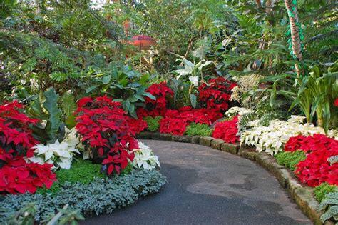 imagenes de jardines en navidad plantas de record eljardindemaruylola esel jard 237 n de