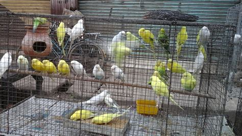 bird shop in local market asansol west bengal india