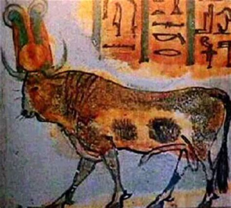 the cult of the apis bull the history cults of the sacred bulls