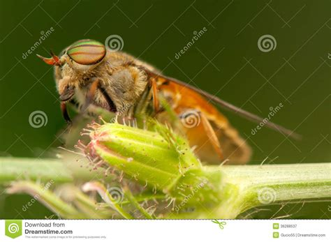 the natural world close up 085738631x fly royalty free stock photography image 36288537