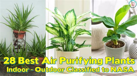 best houseplants for clean air low light indoor plants clean air iron blog