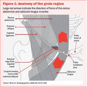 pulled groin diagram sports injuries prevention and treatment of groin
