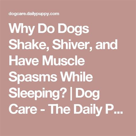 why do dogs shiver 17 best ideas about spasms on discount supplements benefits of