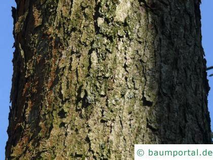 Rinde Der Eiche by Eichen Rinde Baumportal