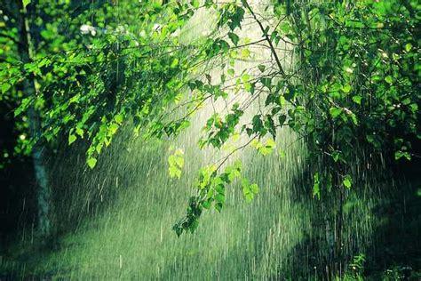 imagenes bellas lloviendo la lluvia en el amazonas disminuir 225 entre un 12 y un 21