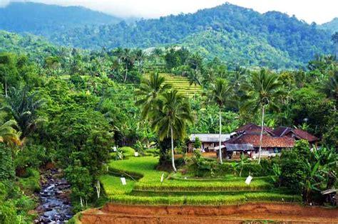 foto alam alam hijau pedesaan