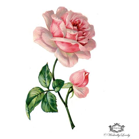 victorian rose tattoo pink book illustration wintage floral
