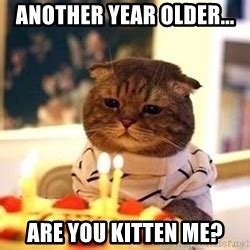 Birthday Cat Meme Generator - happy birthday jessica another year older are you kitten