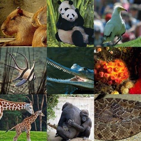 Natgeo Lis national geographic endangered species list save the