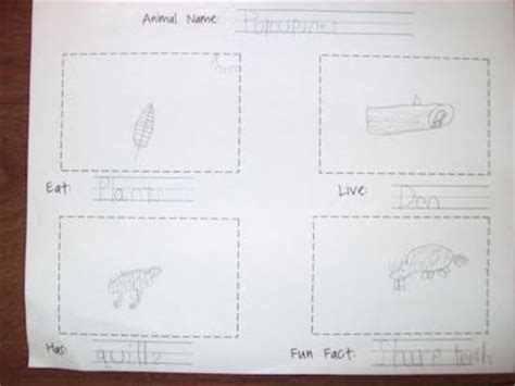 animal book report 24 best images about writing non fiction on