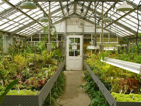 inside greenhouse ideas greenhouse designs which one fits your needs part 2