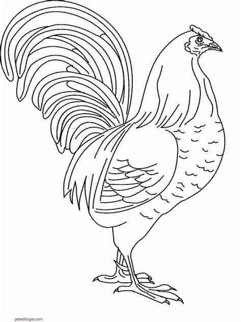 animales fotos dibujos imagenes fotos de gallos dibujos de gallos para colorear