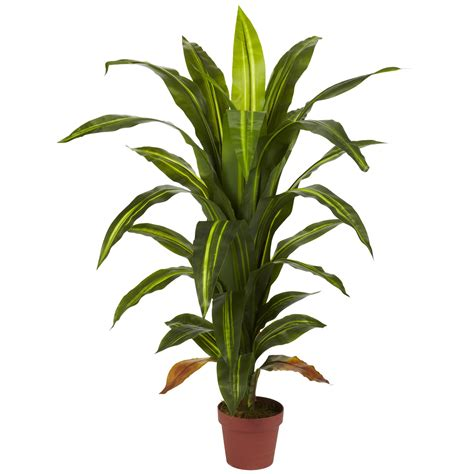 potted plants 4 foot dracaena plant potted 6650