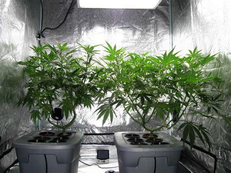 indoor marijuana grow rooms green cultured cannabis college