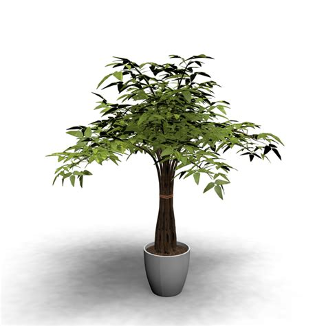 indoor vine indoor plant design and decorate your room in 3d