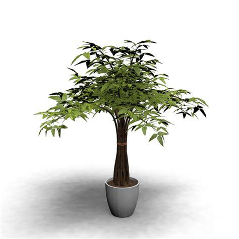 indoor vine plants indoor plant design and decorate your room in 3d