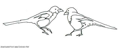 magpie bird coloring page 55 amazing printable magpie bird coloring pages for