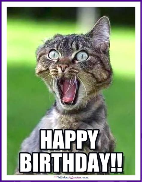 Cat Birthday Memes - happy birthday memes with funny cats dogs and cute animals