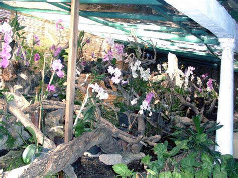 orchideen garten teneriffa orchideengarten sitio litre ii kanaren