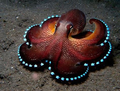 design inspiration octopus octopus inspirations in modern interior design and home decor