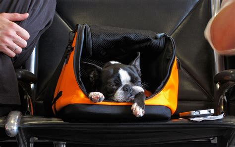 delta s new for flying with pets travel leisure
