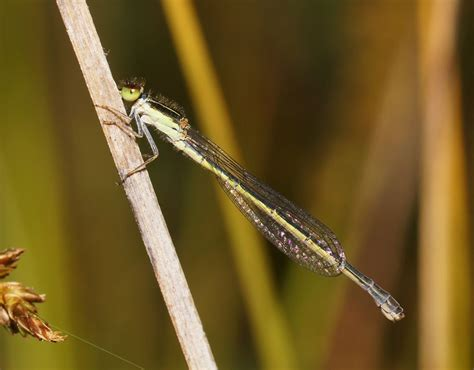 Girraween National Park - Animals - Arthropods - Insects ...