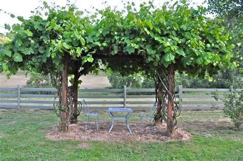 how to build trellis how to build a grape trellis photo farmhouse design and