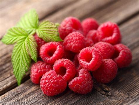 Benih Buah Raspberry Hitam Murah kandungan dan manfaat buah raspberry bagi kesehatan bibitbunga