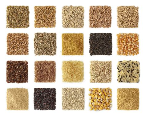 whole grains nutrients settling the great grain debate can wheat and other