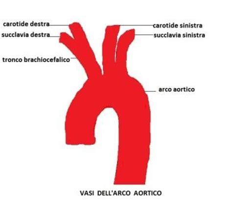 vasi epiaortici anatomia med 2000 eco