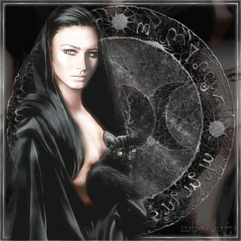 mover imagenes latex mis gatitos 191 por qu 201 los gatos negros tienen ese color