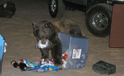 bears and food storage yosemite national park us