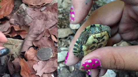 baby buried in backyard baby turtles buried in my backyard mini vlog youtube