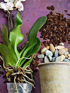 orchids types growing tips
