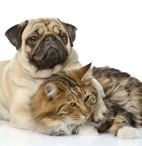 pugs and cats pug names for the one of a or