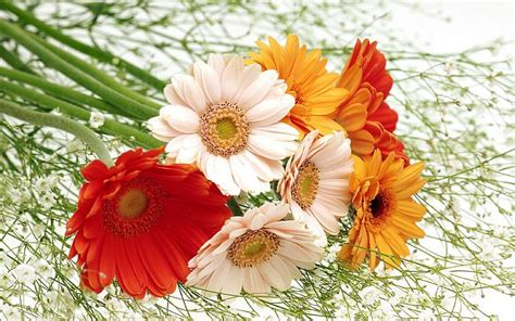 beautiful flowers image funny wallpapers hd wallpapers beautiful flower wallpaper