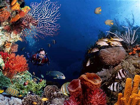 underwater dive free scuba diving wallpapers wallpaper cave