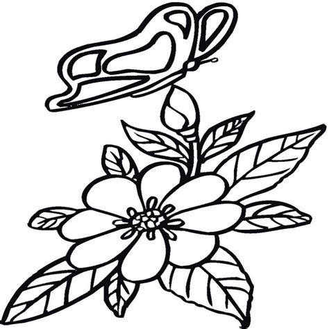 imagenes de flores sin pintar inspirado dibujos de mariposas para pintar y colorear