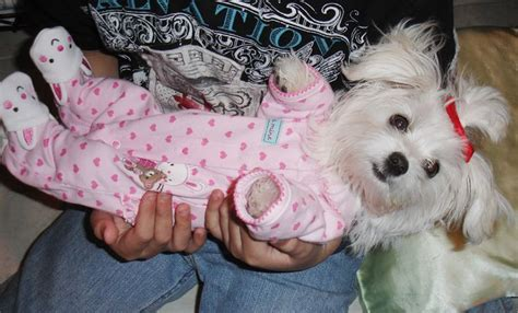 puppy in pajamas 20 cutest dogs in pajamas