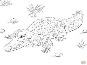 crocodile coloring pages nile crocodile coloring page free printable