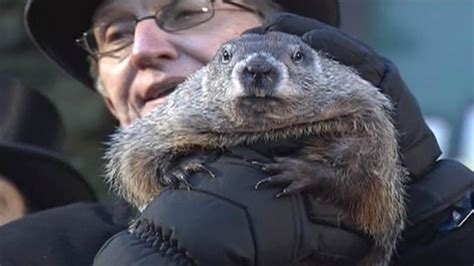 groundhog day phil groundhog day punxsutawney phil predicts early