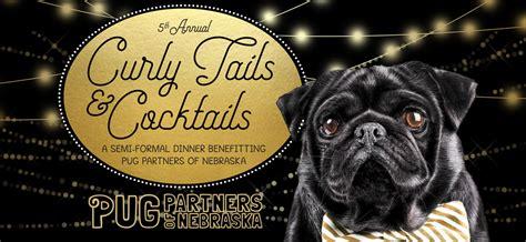 pug partners of nebraska curly tails cocktails 2018 pug partners of nebraska