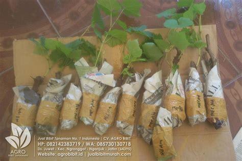 Jual Bibit Buah Tin Nganjuk pengiriman paket bibit anggur ke lung agro bibit id