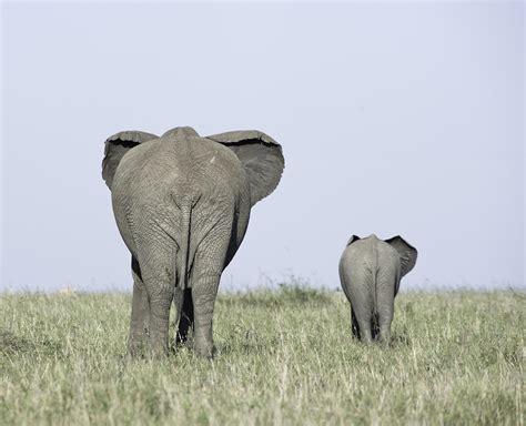 Auf Wiedersehen 5 by Auf Wiedersehen Foto Bild Tiere Tierkinder Natur