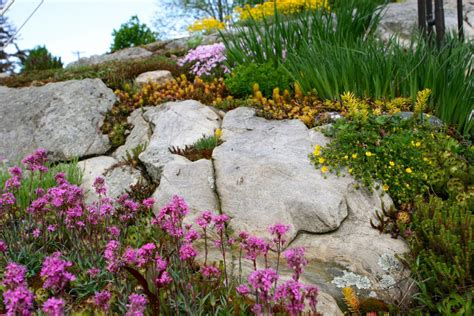 large rocks for gardens carolyn s big rock garden in massachusetts gardening