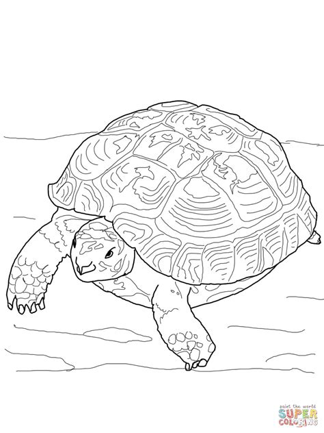 desert tortoise page coloring pages