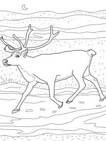 caribou color caribou coloring sheet coloring pages