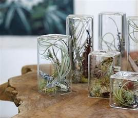 House Decoration Things Air Plants Home Decoration Inspiration Ideas And